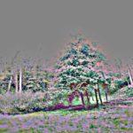 Группа зеленых деревьев в парке — 2