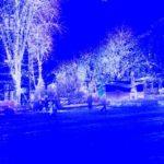 Деревья при дороге – 1