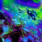 Цветы под окном (в синей гамме)