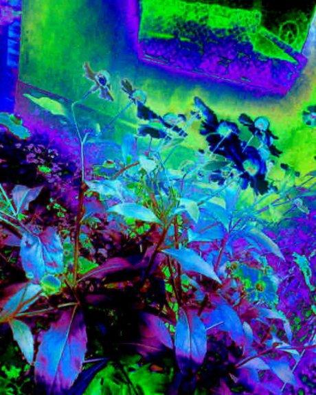 Цветы под окном (в синей гамме) - Геннадий Рыбалко
